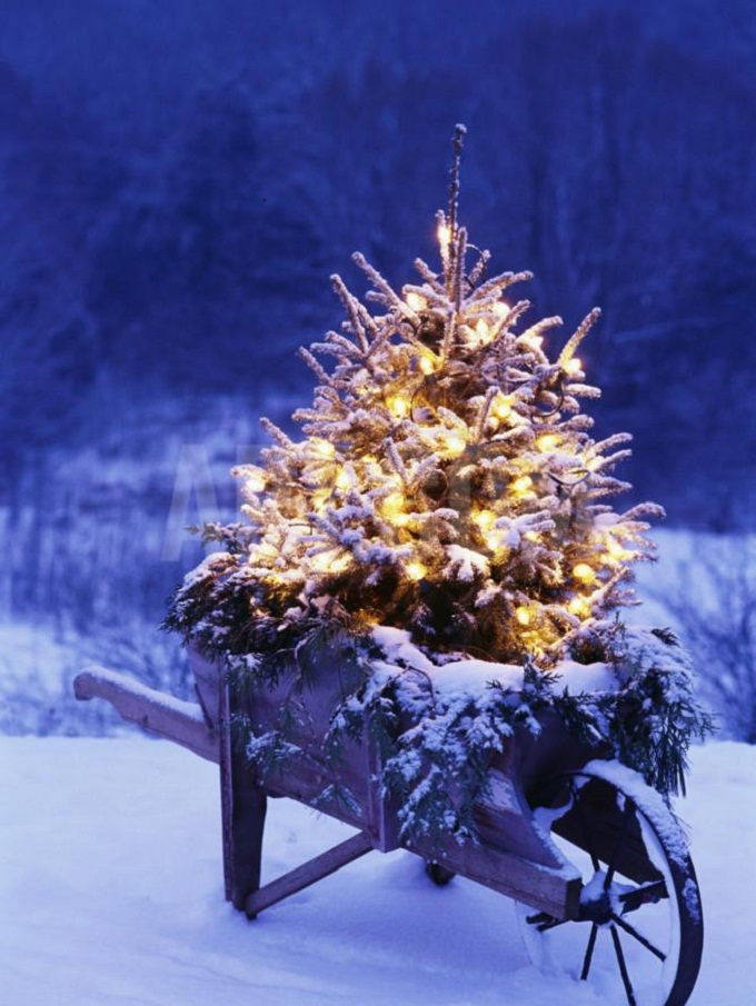lighted-christmas-tree-in-wheelbarrow