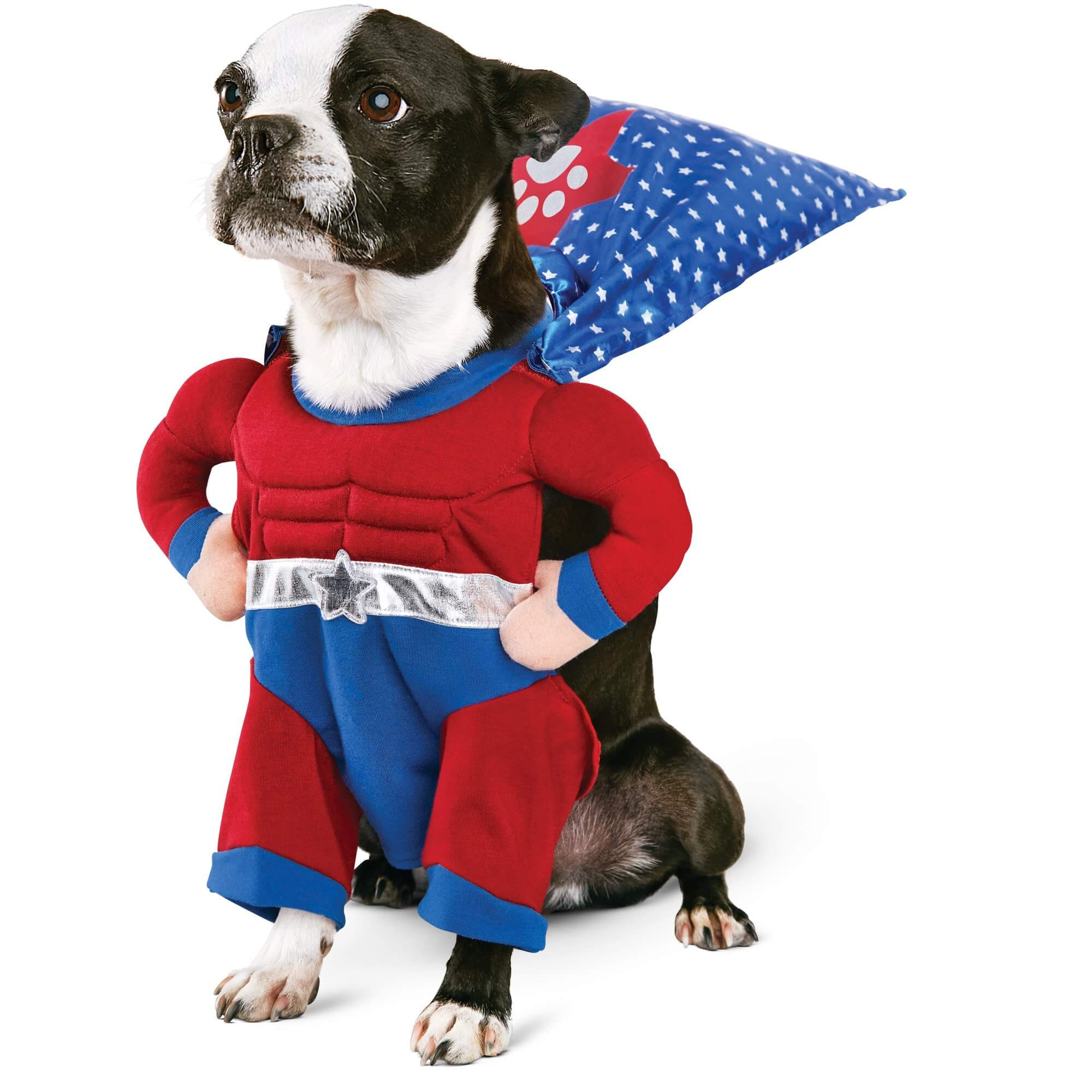 Easy Dog Costumes To Make