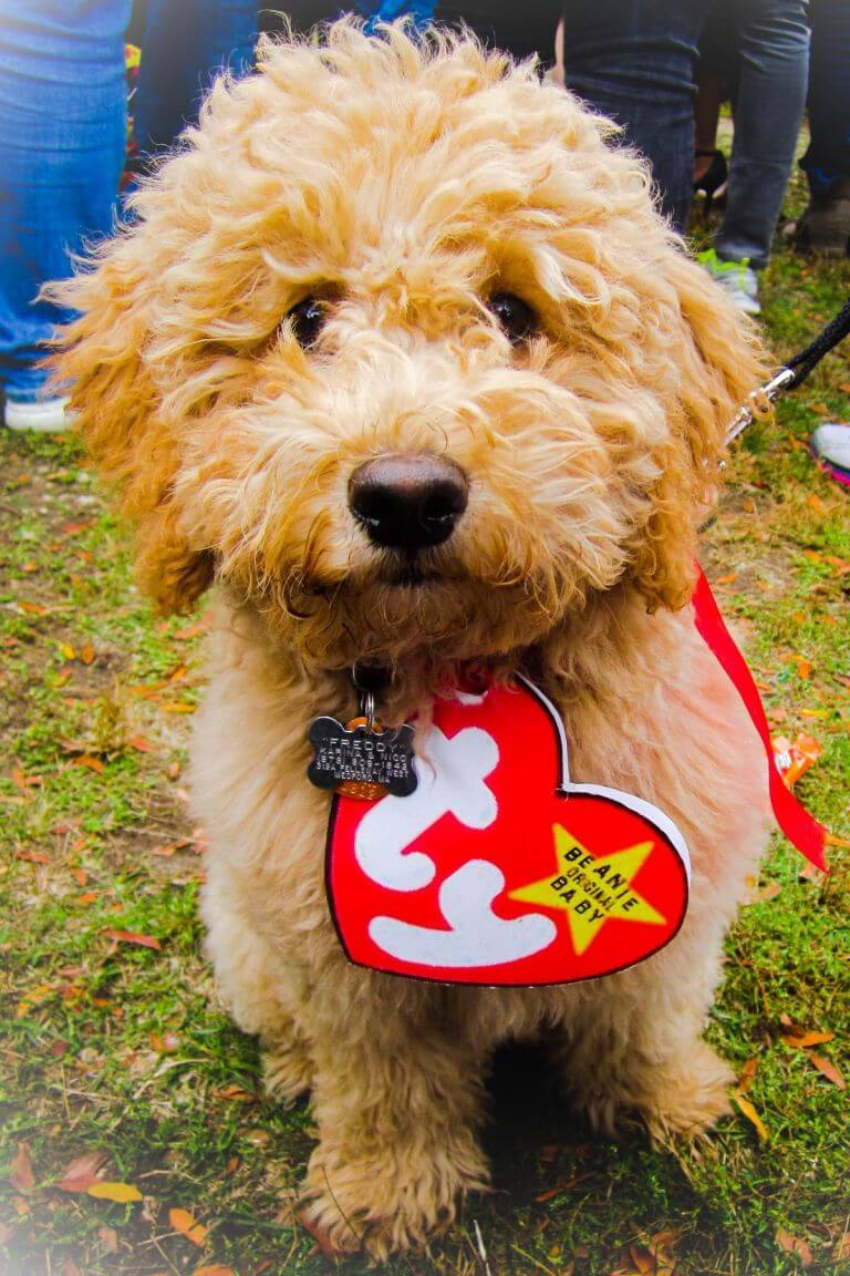 Cute Diy Dog Costumes: Halloween Costume Ideas For Dogs