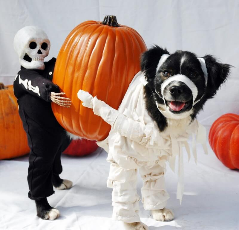 Halloween Costume Ideas For Dogs